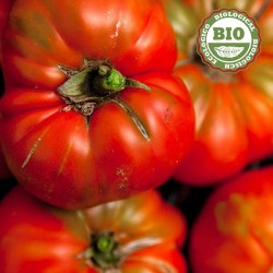 Tomate pour salade (500gr)