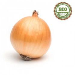 Onion yellow (500gr)