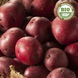 Pommes de terre rouges (1Kg)