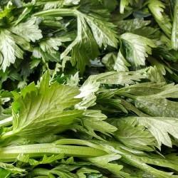 Celery Green (bunch)