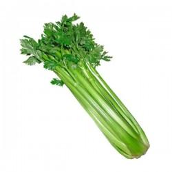 Celery, White