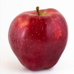 Starking appel (1Kg)