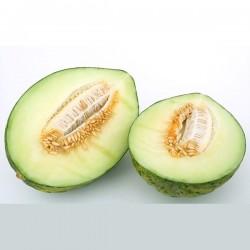 Melones Piel de Sapo unidad