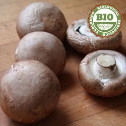 Portobello-paddenstoelen (500gr)