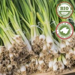 Onions culin sofrito bunch (300gr)