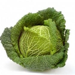 Cabbage Unit (1,5kg aprox)