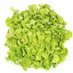 Lettuce, White Oak (unit)