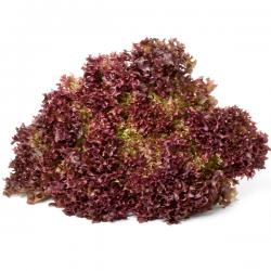 Lettuces Lollo Red (unit)