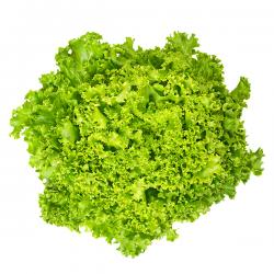 Lettuces Lollo White (unit)