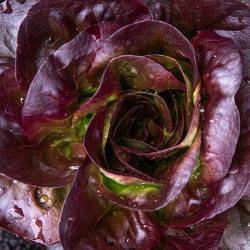 Lettuce Red Oak (unit)
